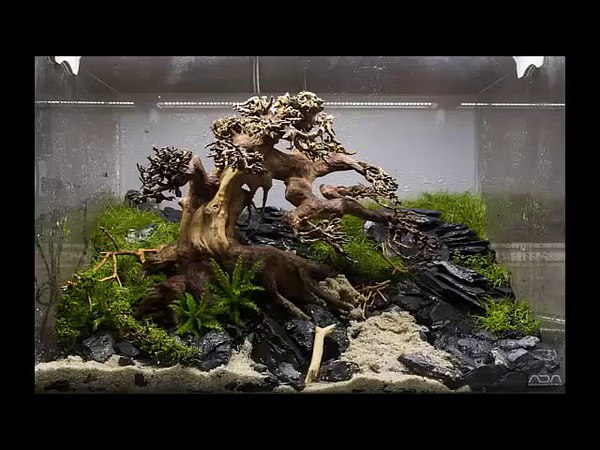 Aquarium moss tree Bonsai driftwood Easy aquascape