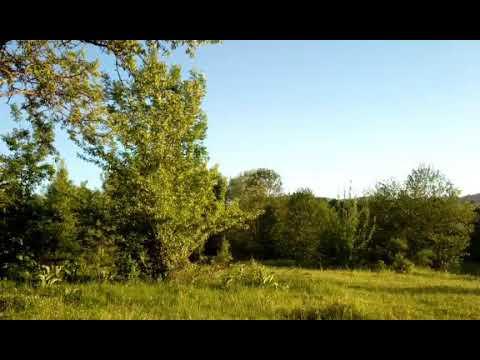 Одинокий пастух от Никиты Казака, первый блин...