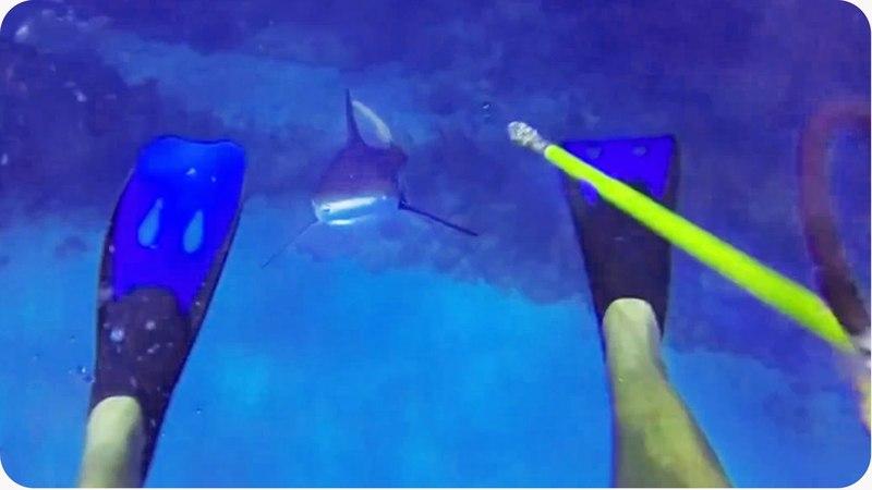 Shark ATTACKS Diver | 70 Feet Deep in Cayman Islands