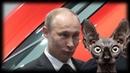 В ожидании трибунала над Путиным Кот Костян
