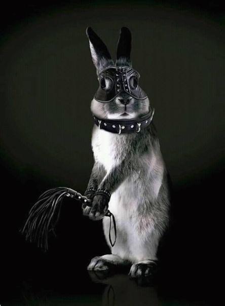 в мерседесе ездил старый серый волк где и как снять зайку знал он в этом толк©Роман Гриценко