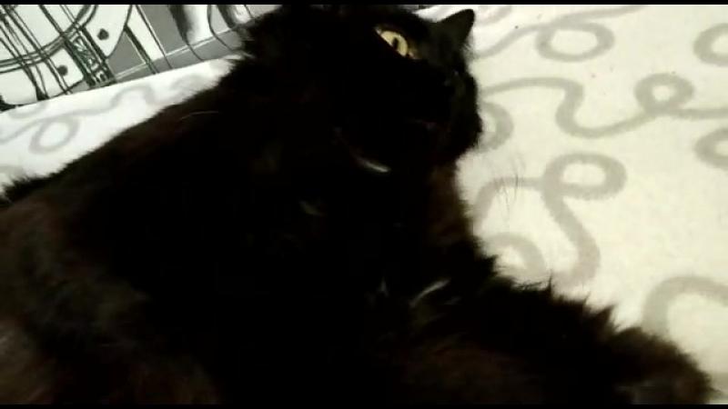 Я-кошка,чёрная как ночь, Нигде такую не найдёшь