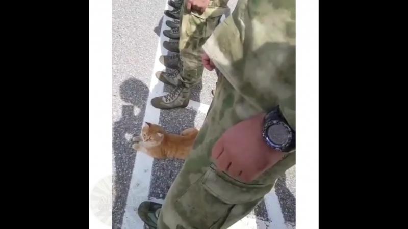 Уже и котов в армию забирают😂