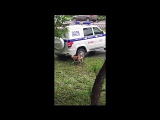 В Екатеринбурге полицейские застрелили пса, защищавшего пьяного хозяина