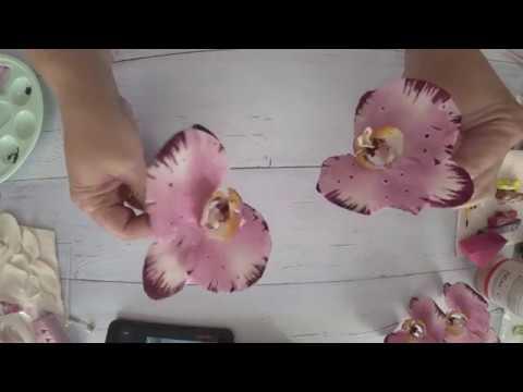 Тонировка орхидеи фаленопсис, сорт Легенда