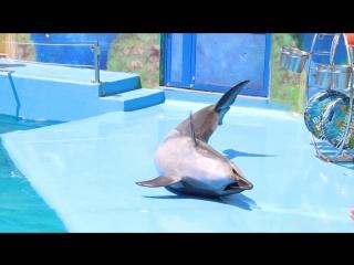 В Одессе зоозащитники вышли на митинг в защиту дельфинов против дельфинария