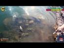 Резиновое чучело утки пр-во Россия [test]