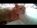 учёный котик