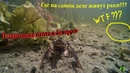 Подводная охота на озере в Беларуси Где на самом деле живут раки