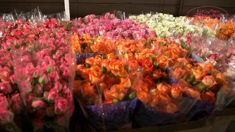 «Эдельвейс» - оптовый склад цветов