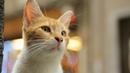 Город кошек - [Full HD 1080i]