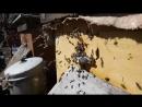 1 е апреля весна и любимые пчелы