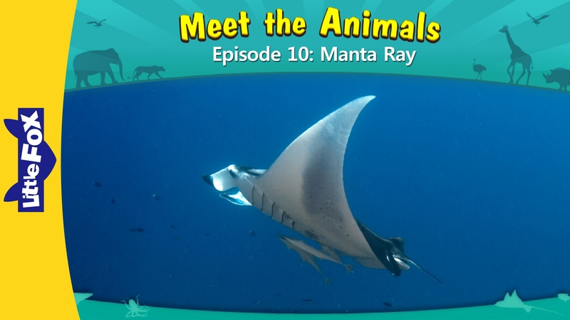 Meet the Animals 10 Manta Ray   Level 2   By Little Fox