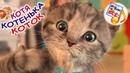 Котя-котенька, коток. Мульт-песенка потешка, видео для детей. Наше всё!