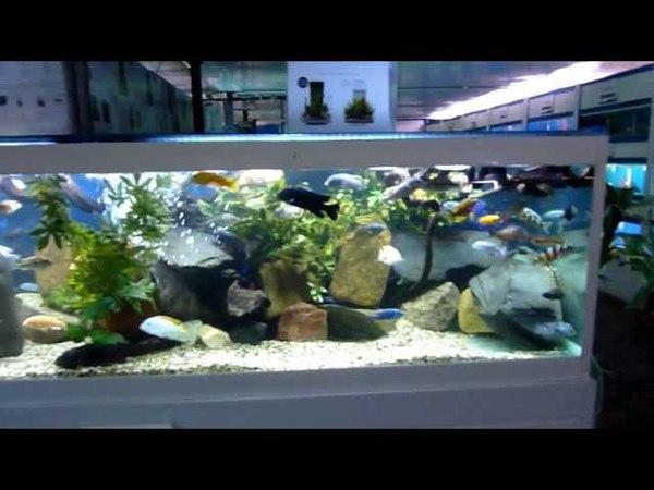 Swallow Aquatics Colchester Tropical Fish Store