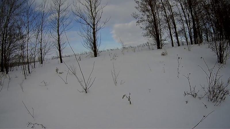 Охота Эстонская гончая заяц 1