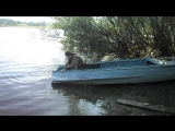На выставку Попова-3: осушаем лодку! #ГужевTV