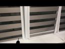 Зебра дымчато лиловая