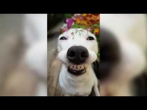 ТЕСТ НА ПСИХИКУ, ПОПРОБУЙ НЕ ЗАСМЕЯТЬСЯ5- Смешные приколы и фейлы с животными