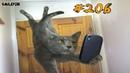 КОШКИ 2018 Смешные коты приколы с котами до слез под музыку – Смешные кошки – Funny Cats