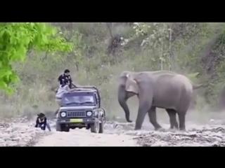 юмор в дикой природе