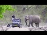 Слон - шутник