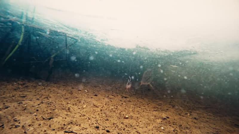 Насадил окуня на ЖЕРЛИЦЫ и вот что произошло! Рыбалка зимой на ЩУКУ Подводная съемка
