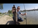How to catch catfish in a pond Bank fishing for catfish in a city pond