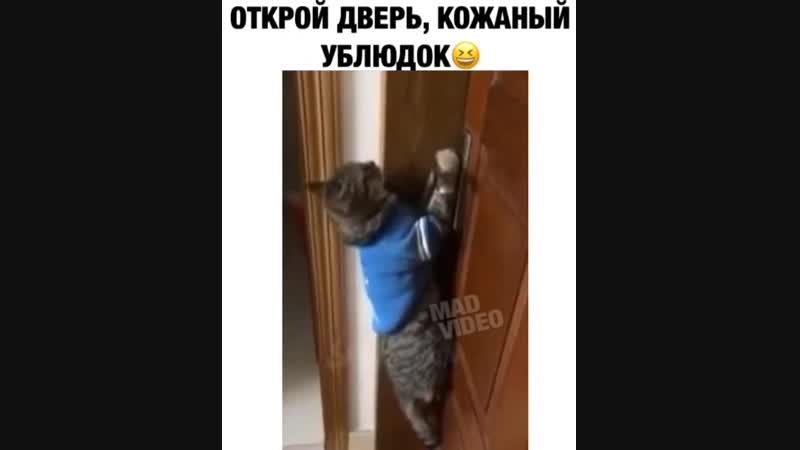 Открой дверь