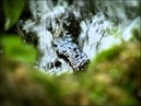 Minuscule.S01E29..The.Caterpillar.Who.Wanted.to.See.the.Ocean