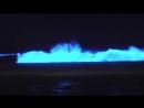 Биолюминесцентный планктон Bioluminescent plankton
