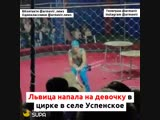 Львица напала не девочку в цирке села Успенское 28 10 18 Армавир Краснодарский край
