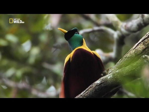 Nat Geo Wild: Дикая природа Дальнего Востока (1080р)
