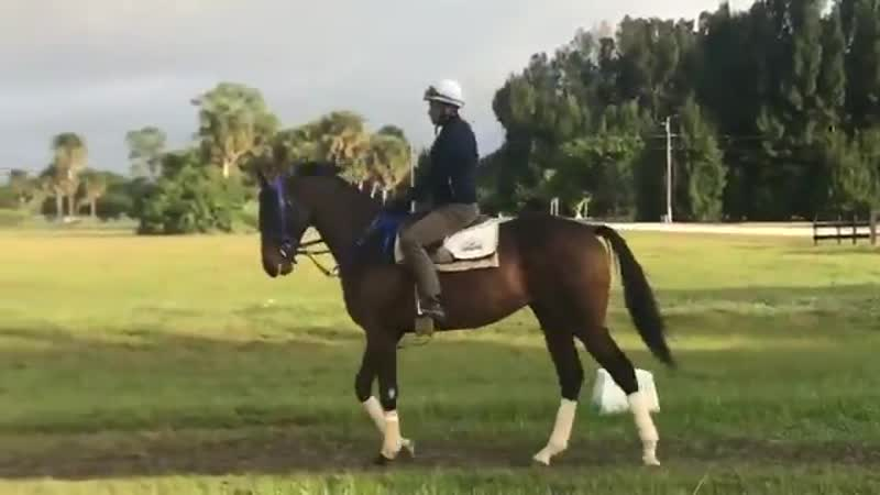 Cairo Cat this morning @PaysonPark we are all looking forward to his next race. Especially @TheWalkingL @AirdrieStud