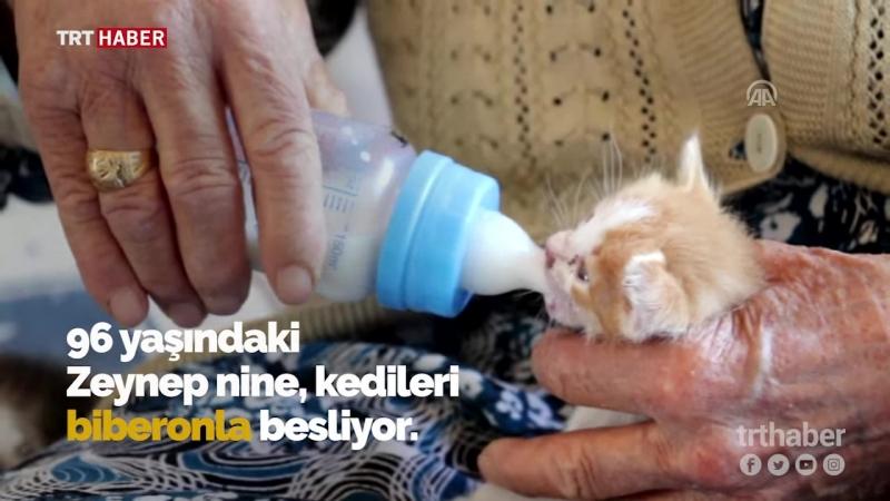 Anneleri ölen yavru kedilere 96 yaşındaki nine sahip çıktı