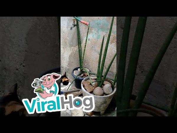 Clever Mouse Escapes Cat || ViralHog