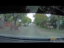 Всадник на лошади полтора часа гонялся по Челябинску за сбежавшим оленем