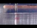Дельфин в Кольском заливе