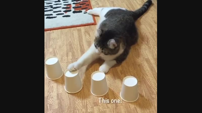 Kotek i gra. Ma dobre oczy)