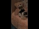 Наша кошка Даша