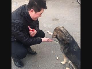 Бродячая собака дает лапку перед тем, как получить угощение