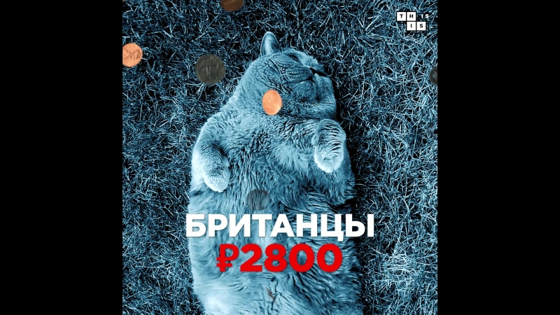 Россияне закупились котами после обвала рубля
