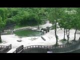 Как слоны спасали тонущего слоненка. Родители, какие они.