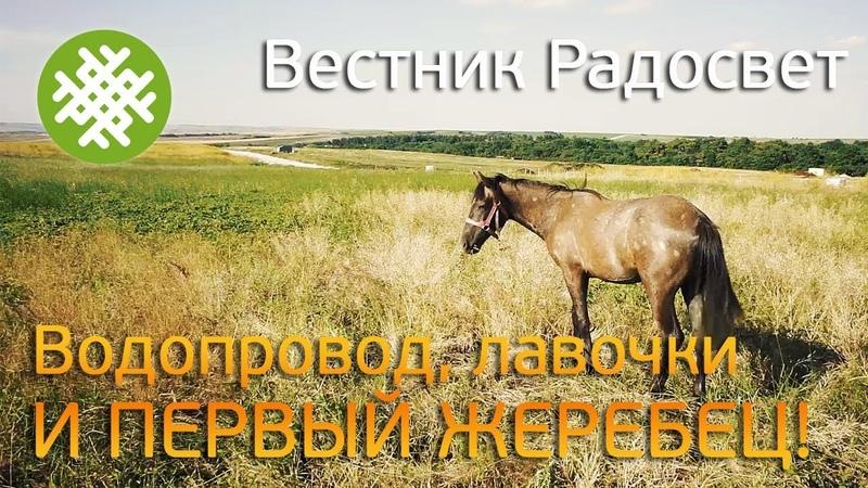 Первый конь в поселении Траншея для водопровода Лавочки на гостевой
