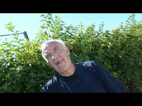 Александр Беляев, 73-летний баскетболист из Боровского р-на
