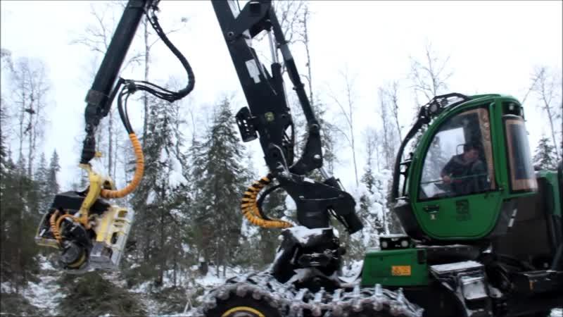 Что может быть интересного в заготовке леса?