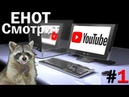 ЕНОТ СМОТРИТ [С ВЕБКОЙ] - YouTube 1