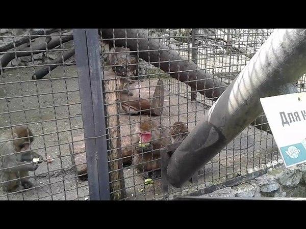 Ялтинский зоопарк Сказка апрель 2018