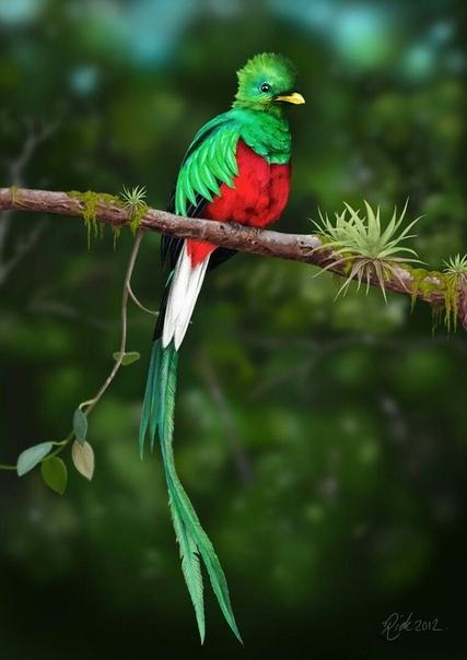 Квезаль  птица свободы