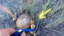 Петарды VS кокос Что будет если взорвать кокос соль крахмал